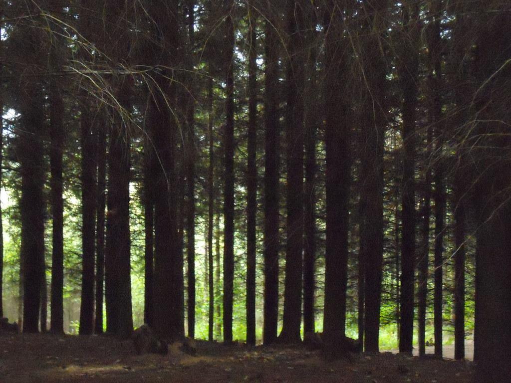 Whiteland wood Crowhurst to Battle