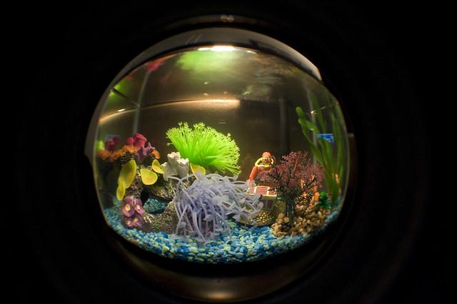 Fish tank decorations 2009 full movie 2017 fish tank for Fish tank full movie