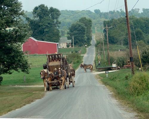 horse man wagon team working indiana amish orangecounty oldorder schwartzentruber dschx1