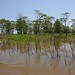Small photo of Amazon River