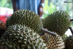 plant(0.0), flora(1.0), produce(1.0), fruit(1.0), food(1.0), durian(1.0),