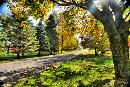 street autumn trees green fall leaves gold pennsylvania evergreen lane flare kpa bellefonte niksoftware tonalcontrast nikond700 capturenx2