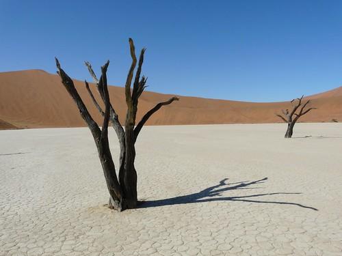 La Laguna muerta en el Desierto del Namib (Namibia)