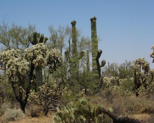 arizona phoenix cacti tucson pinalpioneerparkway