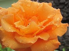 Beauty at the rain
