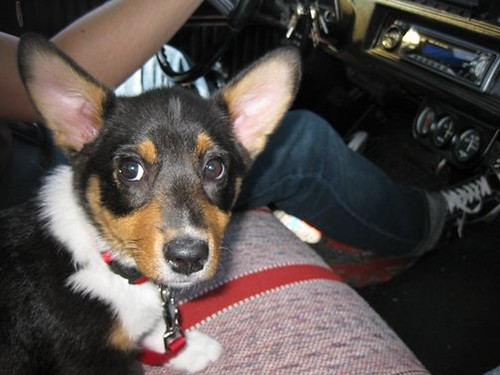Pixel ridin' in the Chevelle with Dad