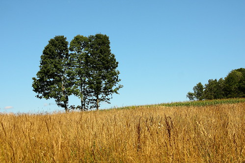 beauty field corn vermont grain bluesky vt threetrees randolphcenter canon40d