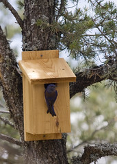 wood, birdhouse, fauna, bird feeder, bird,