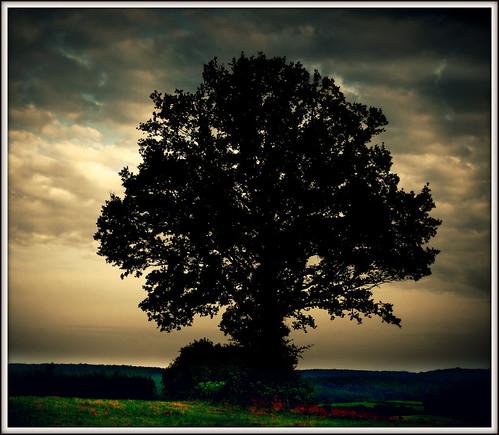 593 Tree - Silhouette