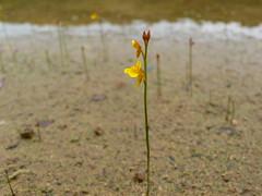 flower on pond / ため池の花