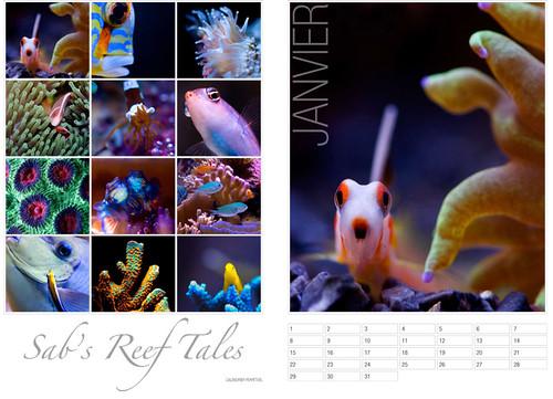 Les calendriers 2010 et les dvd sont arriv s forum vpc for Vpc aquariophilie