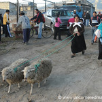 To Market We Go - Otavalo Market, Ecuador