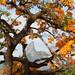 Iema - Monumento natural o Frade e a Freira