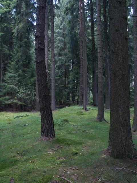 waldbedeckten Tal im Vogtland-Wald 311