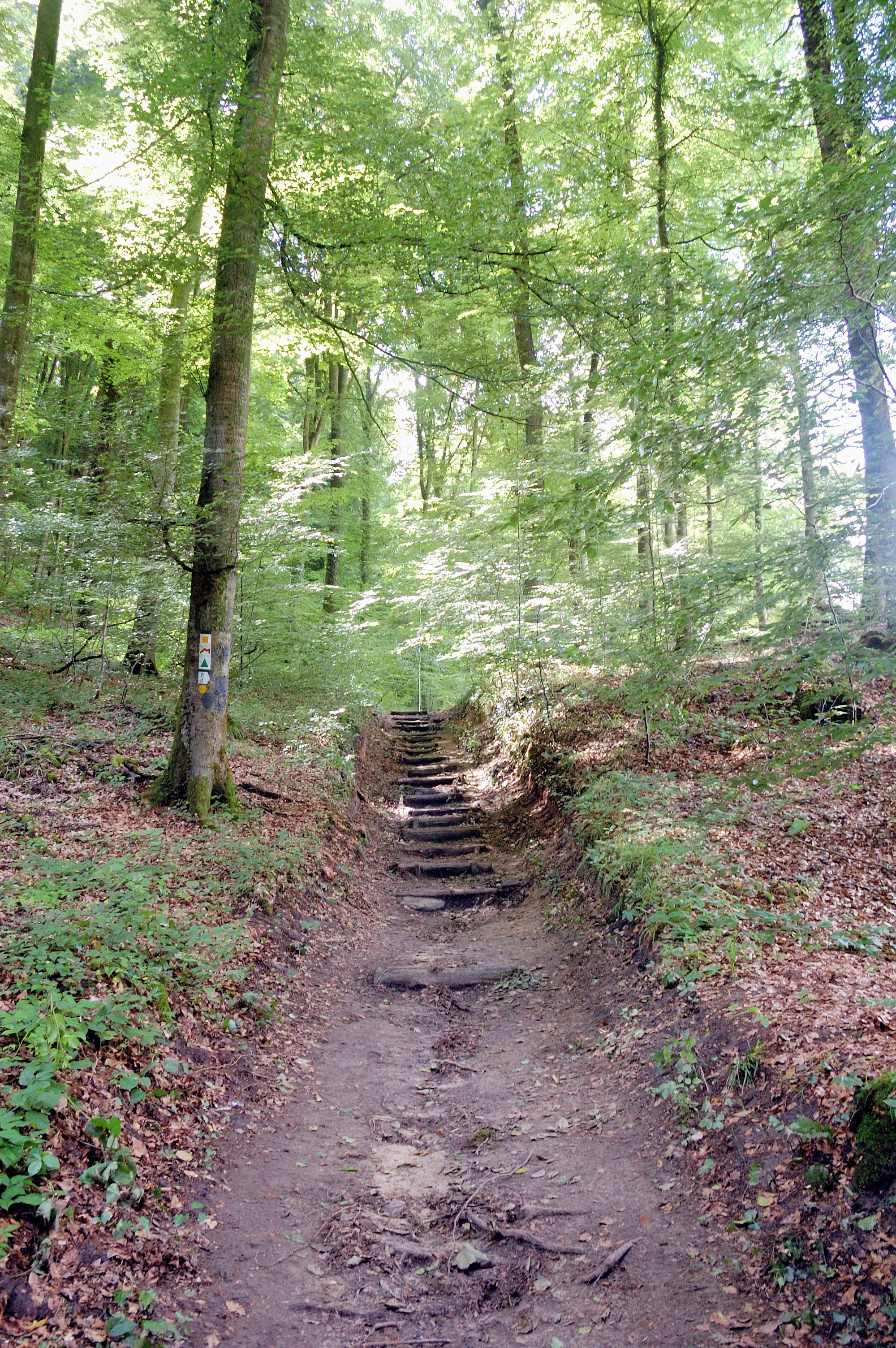 Hiking in Luxembourg.