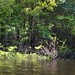 Small photo of Amazon