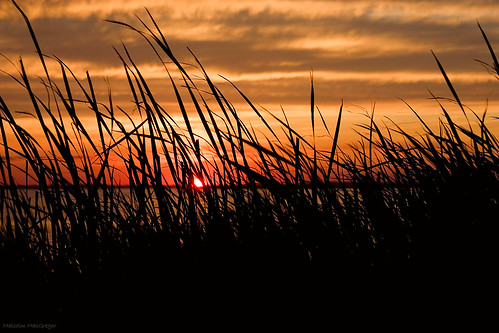 sunset grass sound corolla currituck thechallengefactory