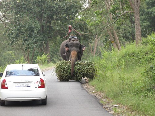 Driving in Mudumalai National Park