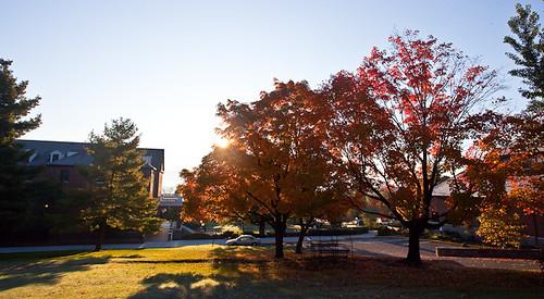 trees fall sunrise emu