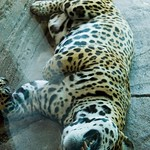 Woodland Park Zoo Seattle 004