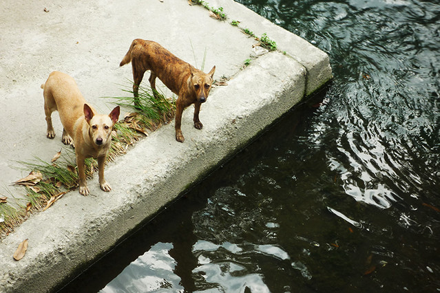 Stray Dogs | These two dogs had hesitant before crossing ...