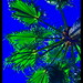 ANOTHER WAY TO SEE A PALM TREE / + 25.000 views FOR ALL MY FLICKR FRIENDS  EXPLORER 13 AGO 2009 #118