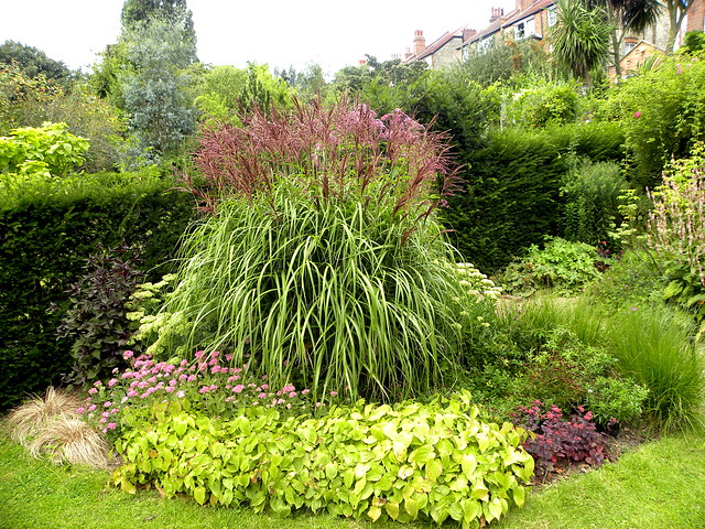 miscanthus sinensis malepartus a gallery on flickr. Black Bedroom Furniture Sets. Home Design Ideas