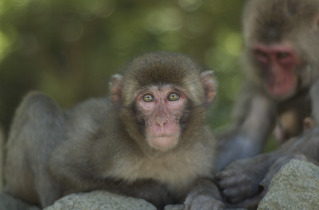 monkey #24