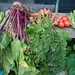 Small photo of Allotment vegetables