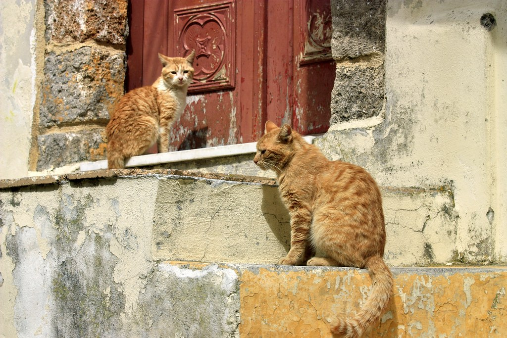 Cats on steps
