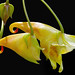jewelweed - Photo (c) James Gaither, some rights reserved (CC BY-NC-ND)