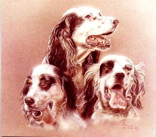 triade di cani