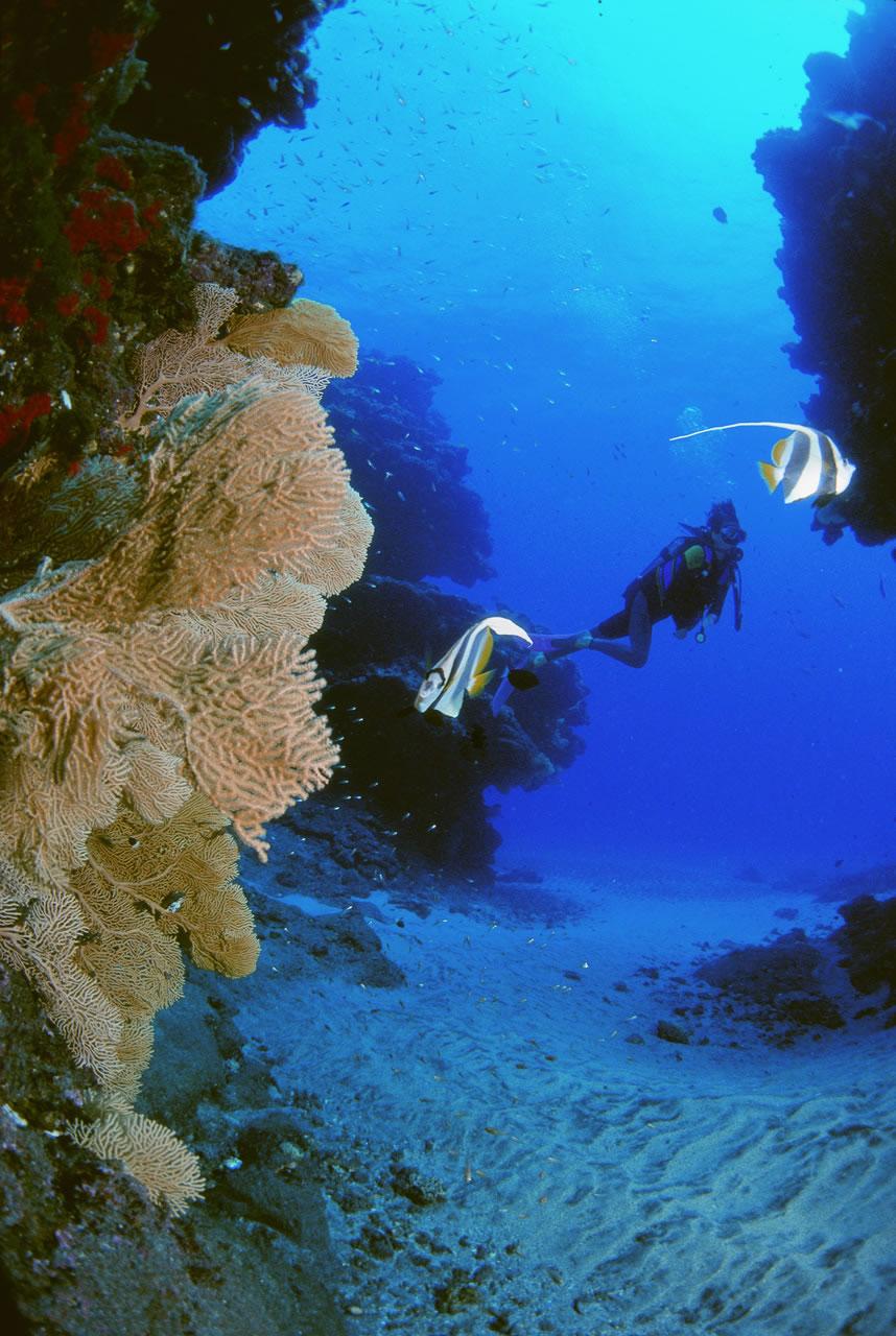Scuba Diving - Mauritius