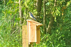 birdhouse, fauna, bird, wildlife,