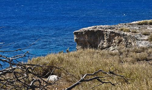 ocean trees landscape dead bay nikon cuba cliffs guantanamo d90 gtmo chazjaz