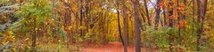 Anamorphic Panaramic Shot of the Forest with Fall Colors!