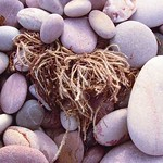 Seaweed-in-Pebbles