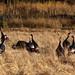 Happy Thanksgiving by Shuttercrack