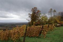 Bluemont Vineyard Vines 4