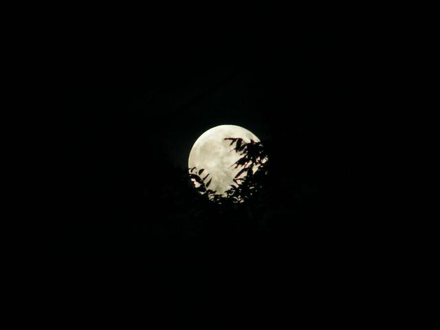 満月- Fullmoon