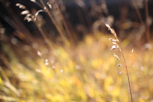 autumn :: grass