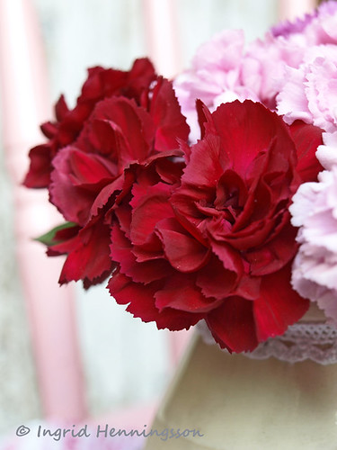 Red Pinks