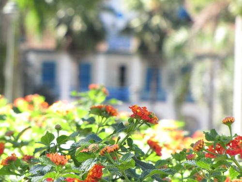 Cidade das Flores