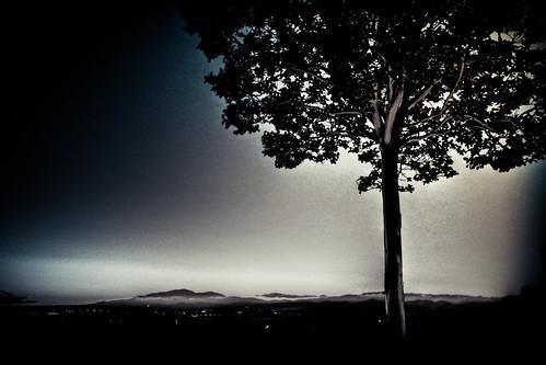 california sky cloud tree explore 2009 32 pleasanton ♥ queensofthestoneage mountdiablo crapemyrtle lagerstroemia lightroom2 ef1635mmf28lusmii photomatix3 eos5dmarkii utwsouthside utwsyrakousai thehangintree