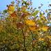 Fall near home