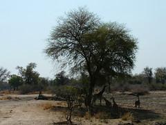 Zambia03SouthLuanga137
