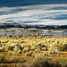 Mono Lake Panoramic View