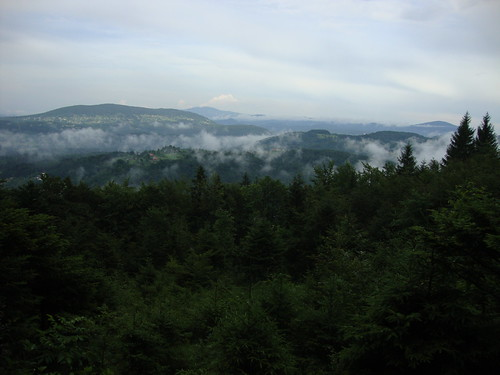 trees mountains tree nature beautiful fog forest woods view hills slovenia smokymountains rog smokeymountains treecovered kočevski kočevskirog treescovered