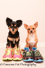 3/12/A/The Boyz (Dogs in Sketchers)