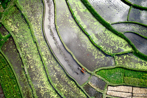 Rice terraces, Tirtagangga, Bali